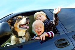 Driving pet safety tips